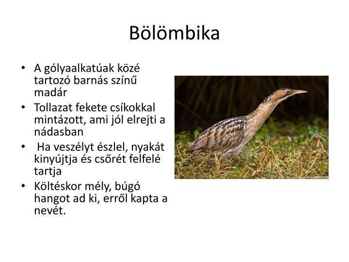 Bölömbika