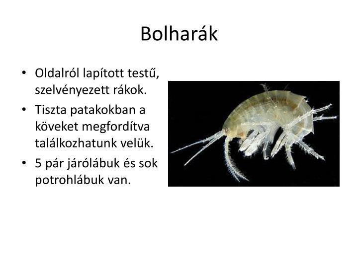 Bolharák