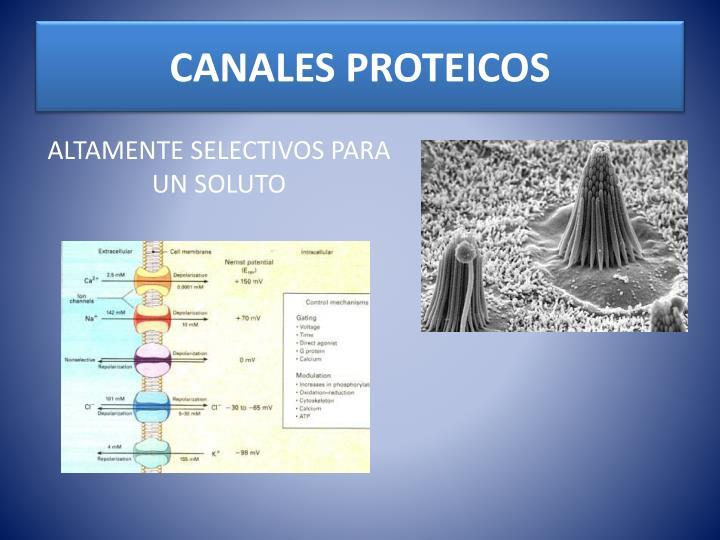 CANALES PROTEICOS