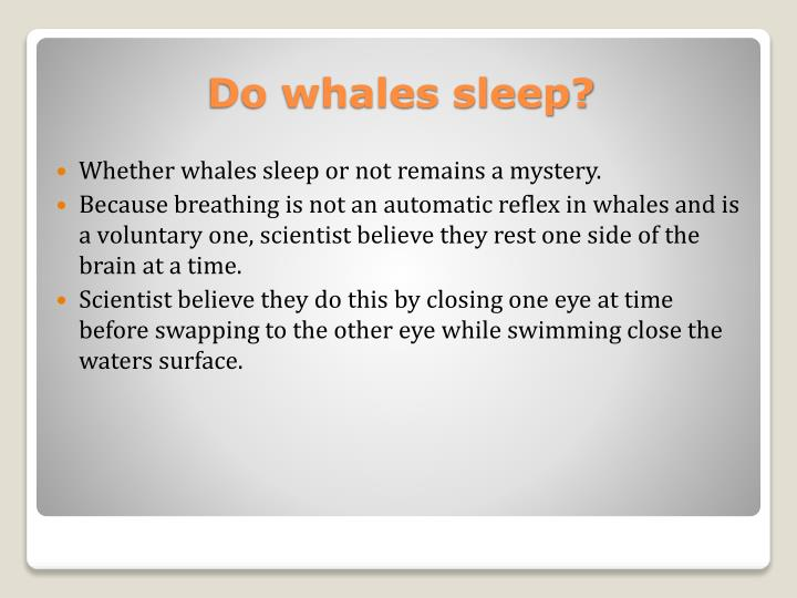 Whether whales sleep or not remains a mystery.