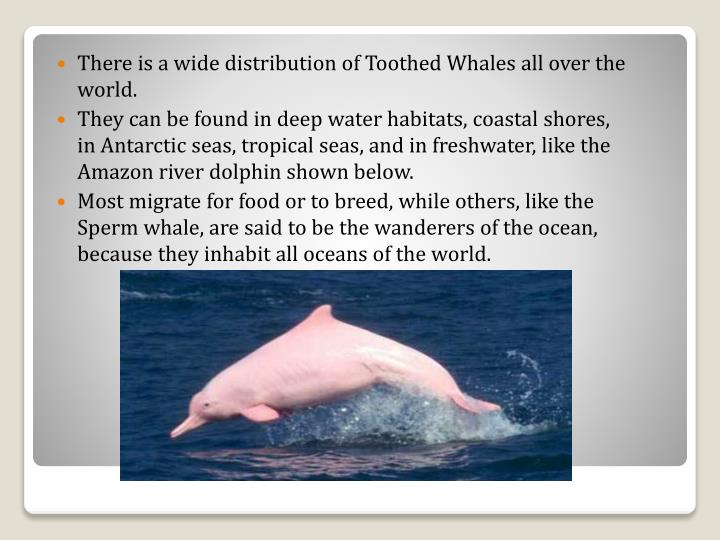 There is a wide distribution of Toothed Whales all over the world.