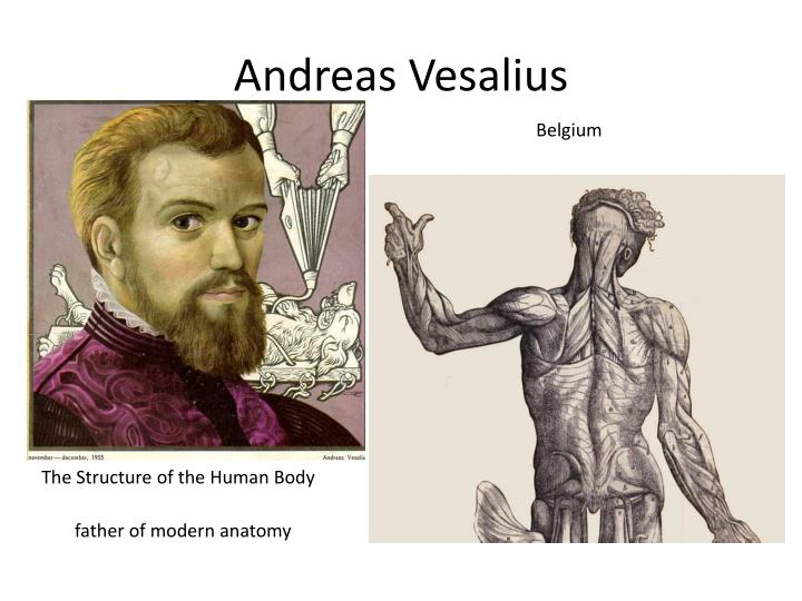 Who is the father of modern anatomy