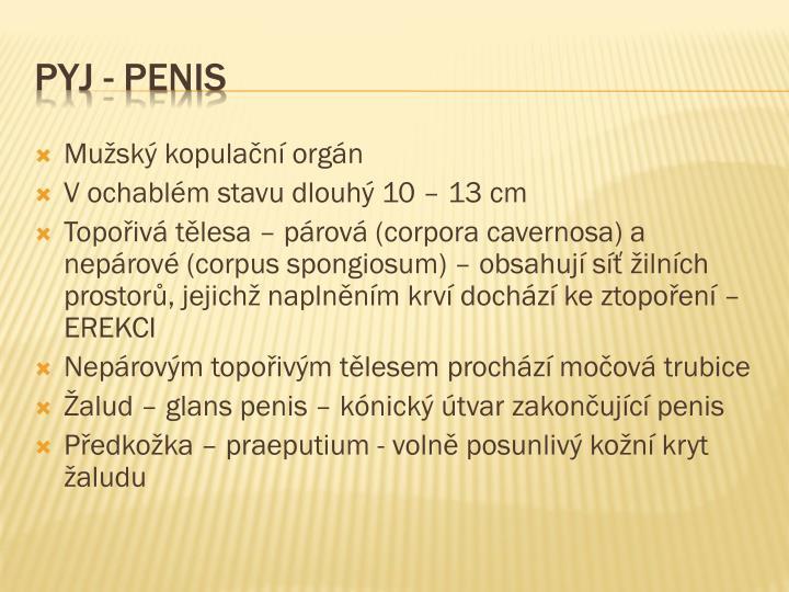 Mužský kopulační orgán