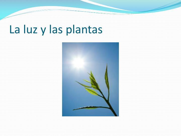 La luz y las plantas