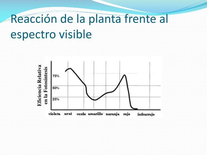 Reacción de la planta frente al espectro visible
