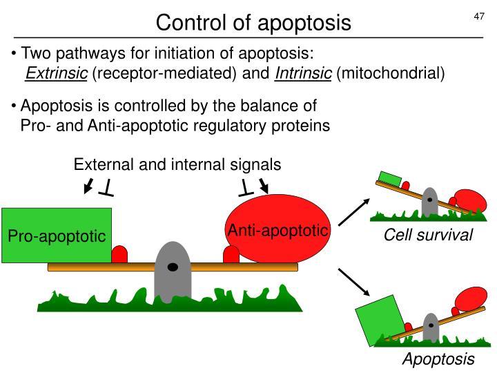 Control of apoptosis