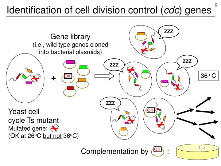 Identification of cell division control