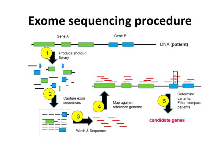nhlbi exome sequencing project Am j hum genet 2016 oct 699(4):791-801 doi: 101016/jajhg201608012 epub 2016 sep 22 guidelines for large-scale sequence-based complex trait association studies: lessons learned from the nhlbi exome sequencing project auer pl(1), reiner ap(2), wang g(3), kang hm(4), abecasis gr(4), altshuler.