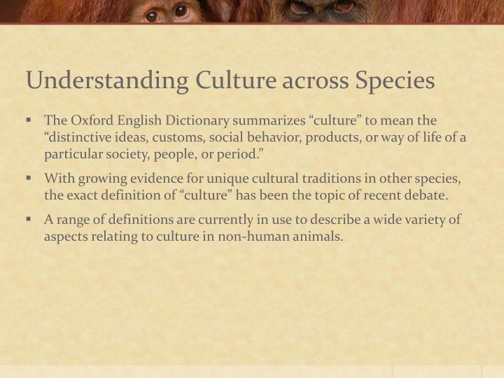Understanding culture across species