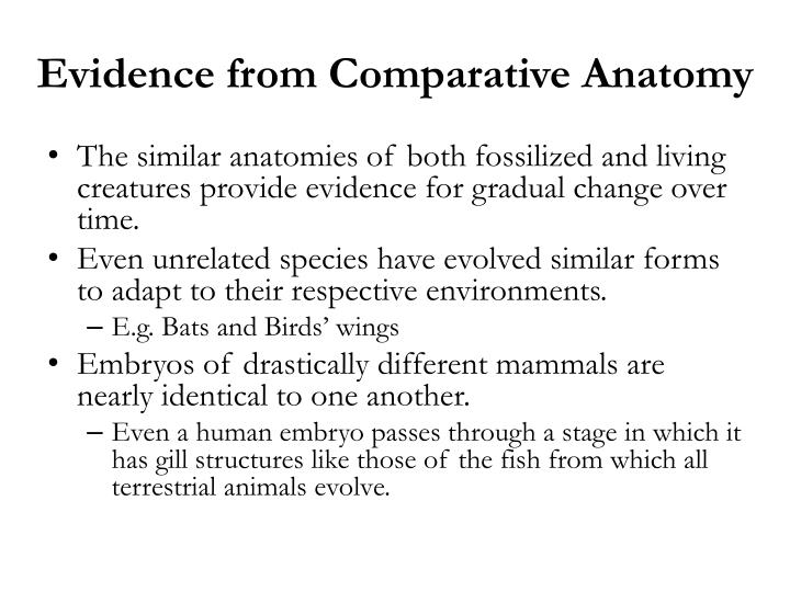Evidence from Comparative Anatomy