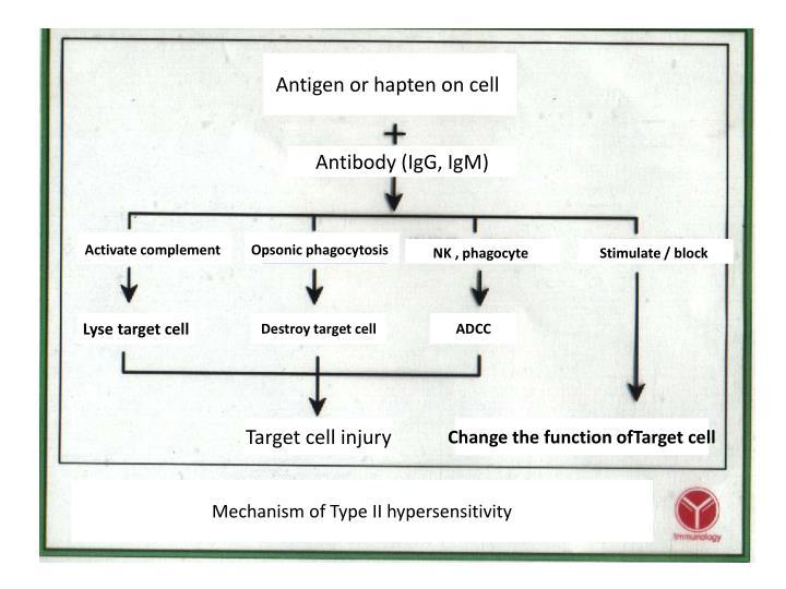 Antigen or