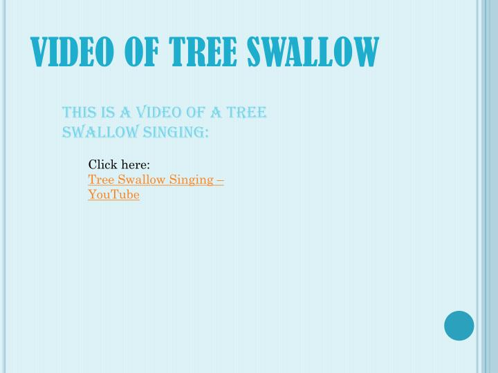 VIDEO OF TREE SWALLOW