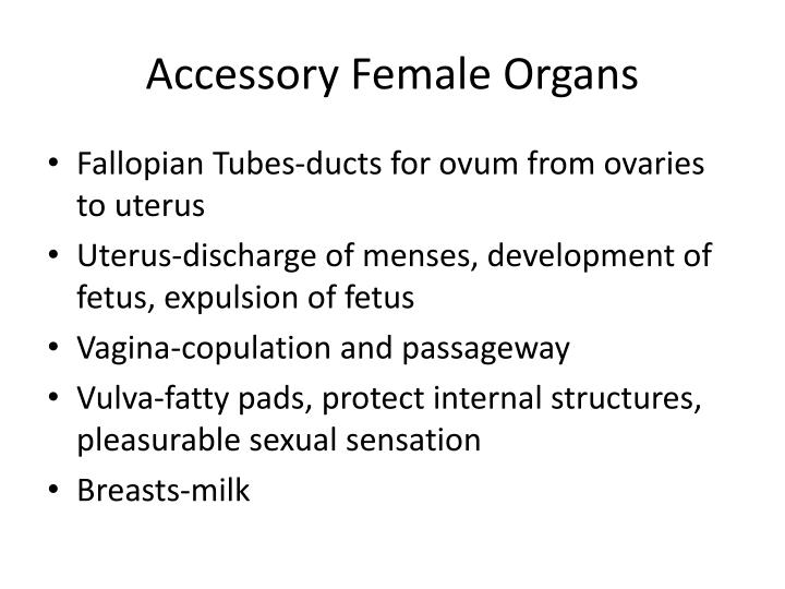 Accessory Female Organs