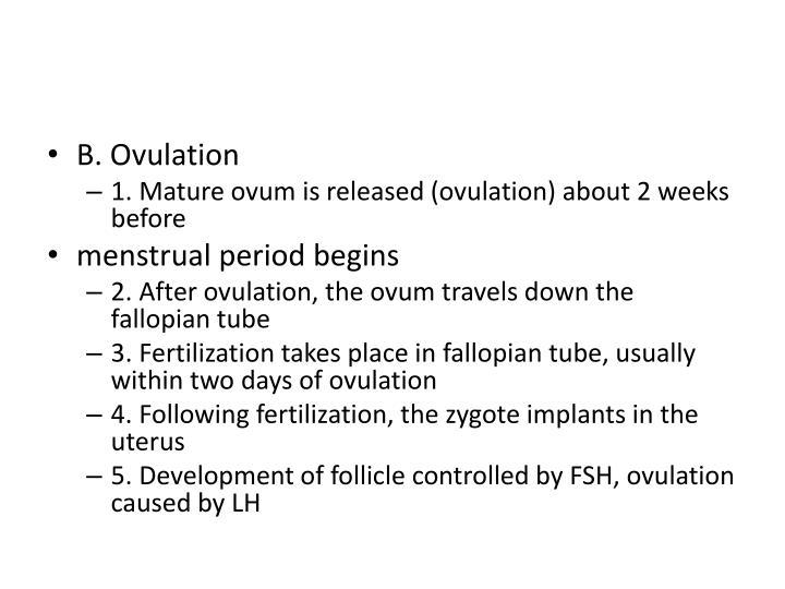 B. Ovulation
