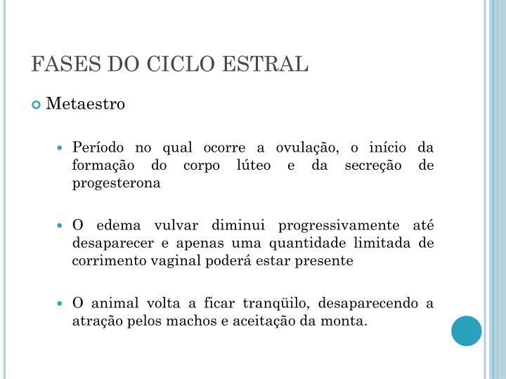 FASES DO CICLO ESTRAL