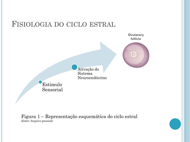 Fisiologia do ciclo estral