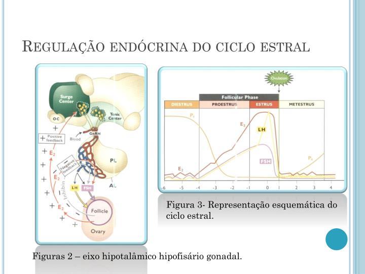 Regulação endócrina do ciclo estral