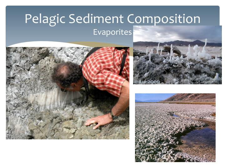 Pelagic Sediment Composition