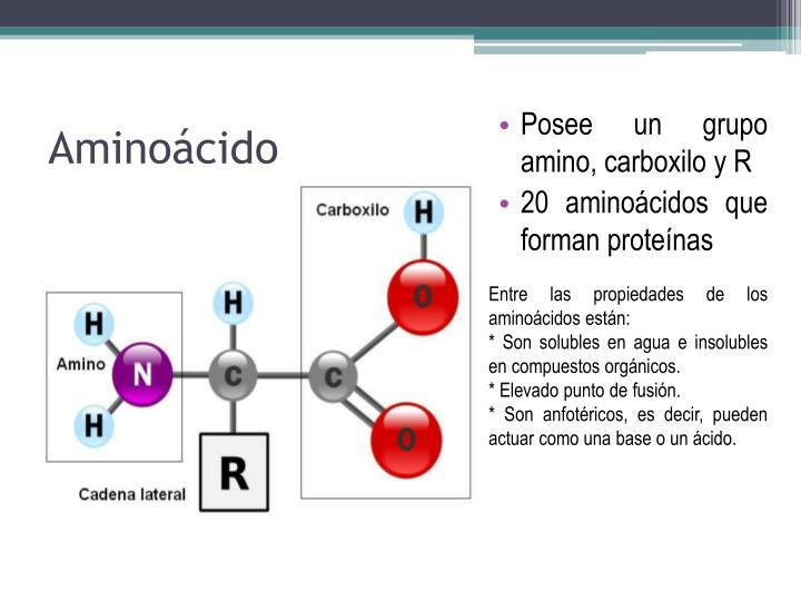 Posee un grupo amino, carboxilo y R