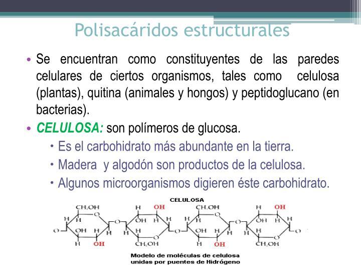 Polisacáridos estructurales