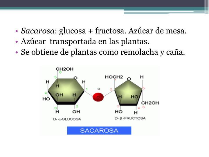 Sacarosa