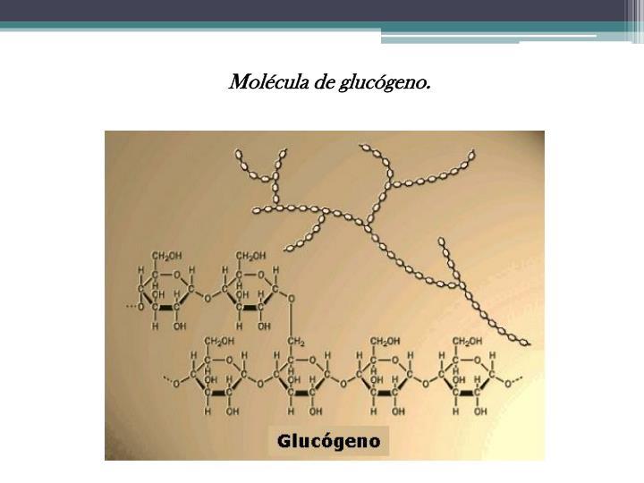 Molécula de glucógeno.