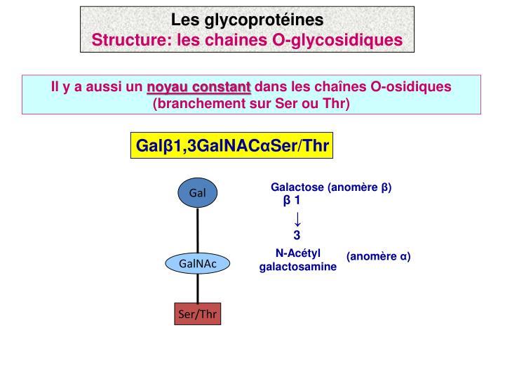 Galactose (anomère