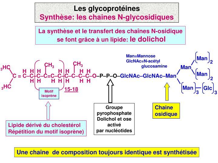 Les glycoprotéines