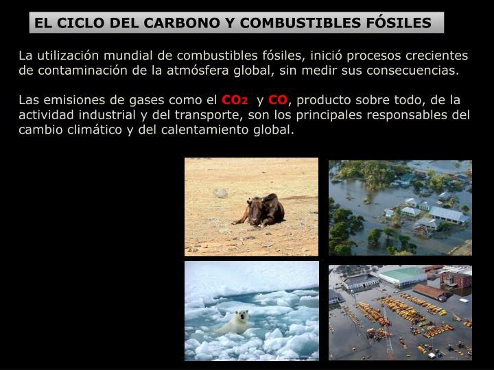 EL CICLO DEL CARBONO Y COMBUSTIBLES FÓSILES