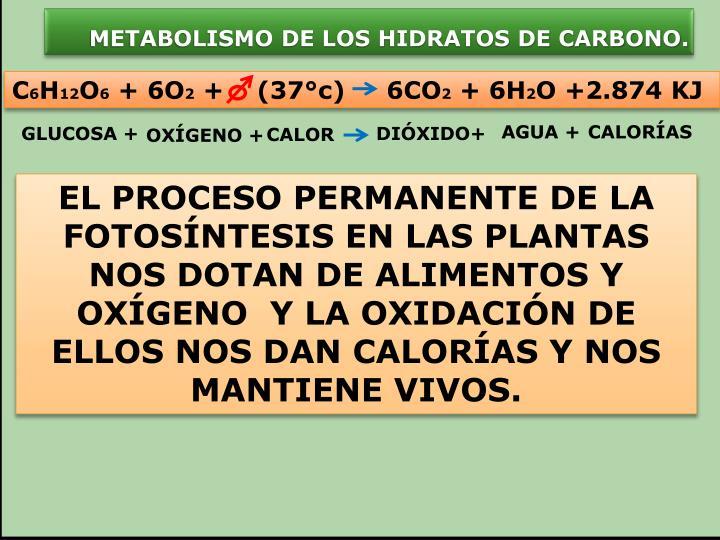 METABOLISMO DE LOS HIDRATOS DE CARBONO.