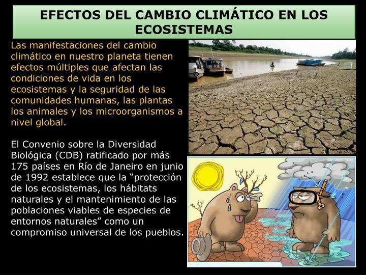 EFECTOS DEL CAMBIO CLIMÁTICO EN LOS ECOSISTEMAS