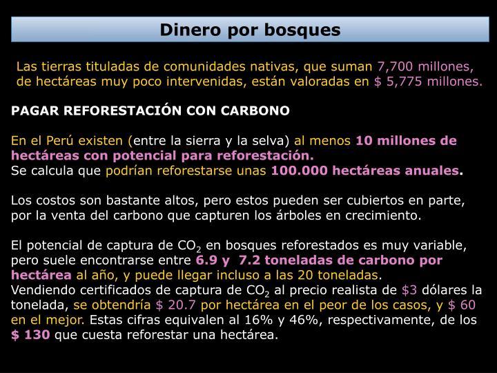 Dinero por bosques