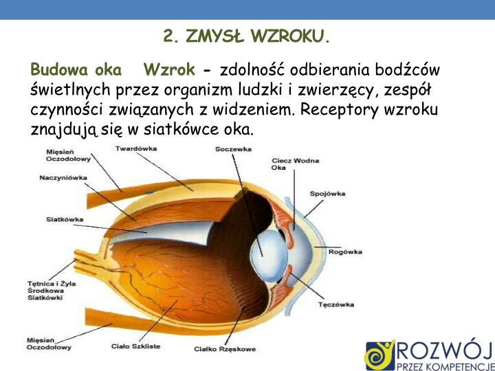 2. Zmysł Wzroku.