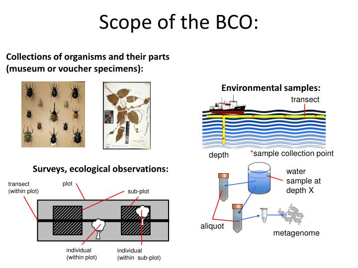 Scope of the BCO: