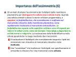 importanza dell assimmetria 6