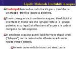 lipidi molecole insolubili in acqua1