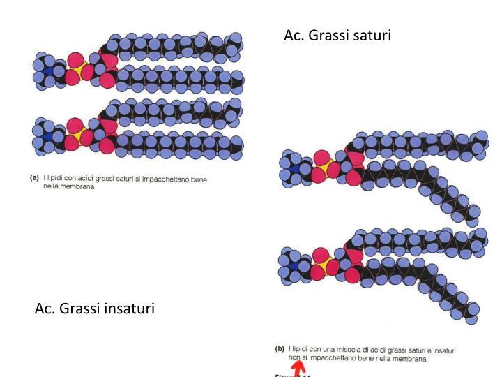 Ac. Grassi saturi