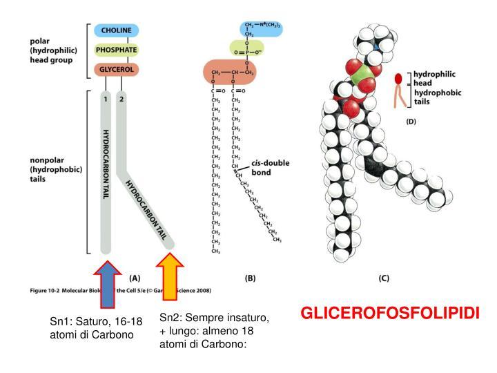 GLICEROFOSFOLIPIDI