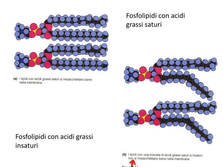 Fosfolipidi con acidi grassi