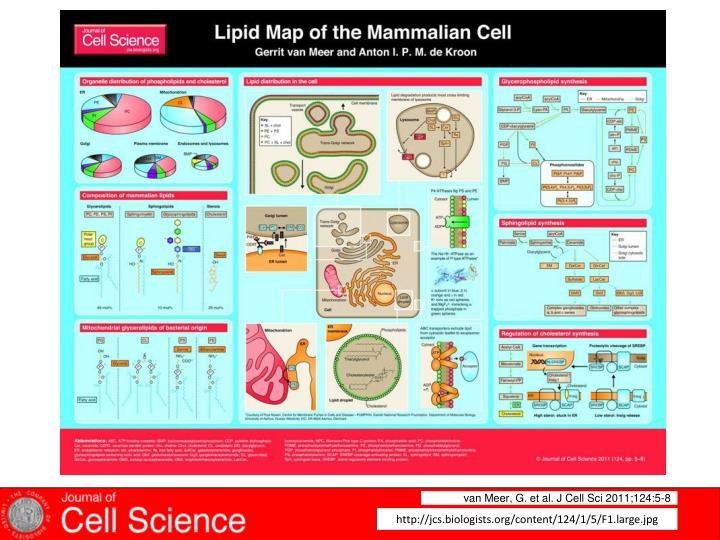 van Meer, G. et al. J Cell