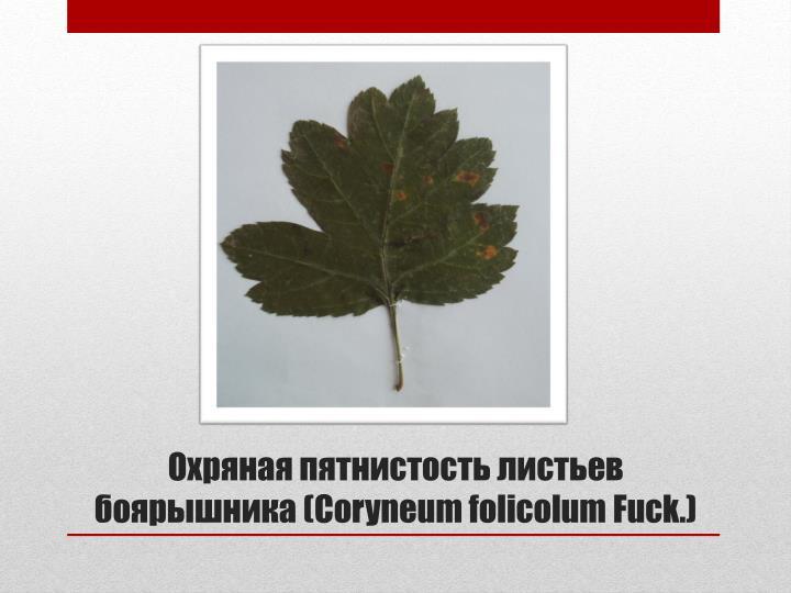 Охряная пятнистость листьев боярышника (