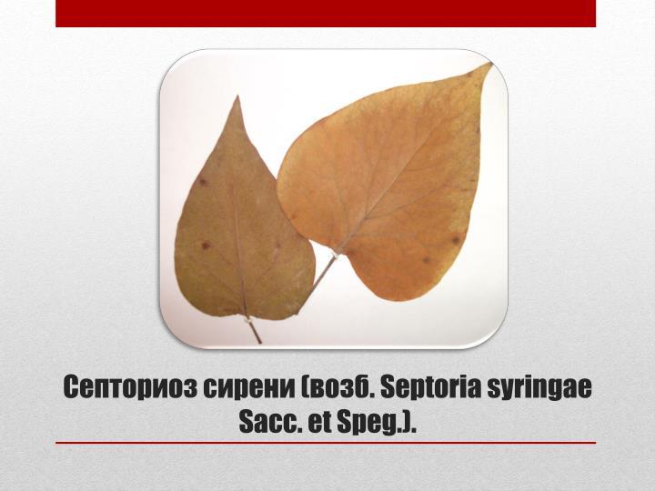 Септориоз сирени (возб.