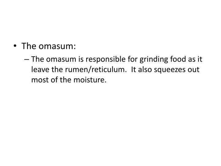 The omasum: