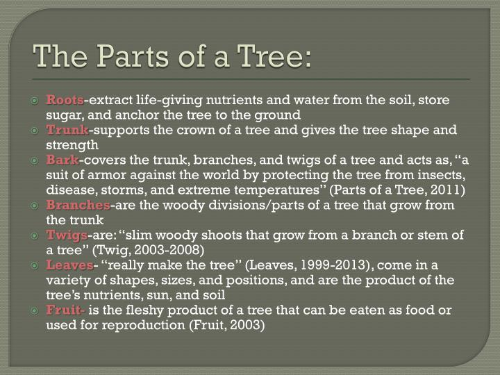 The Parts of a Tree: