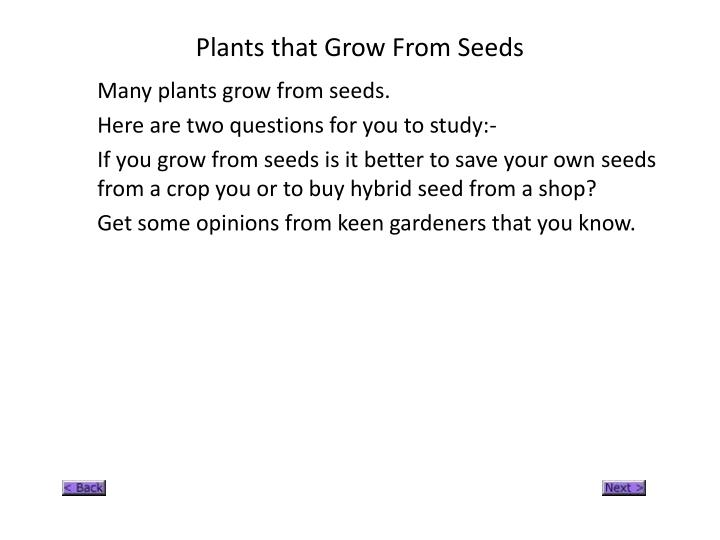 Plants that Grow From Seeds