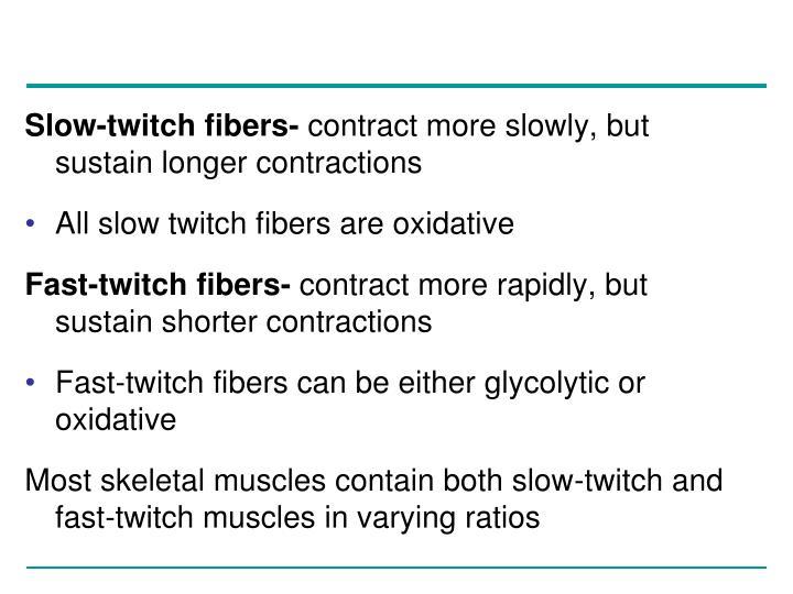 Slow-twitch fibers-