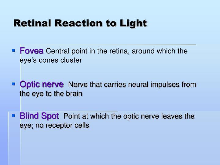 Retinal Reaction to Light