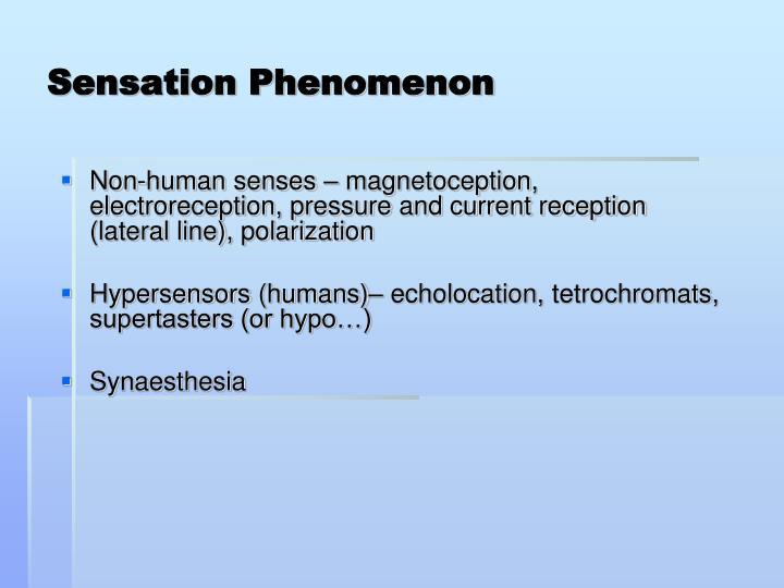 Sensation Phenomenon
