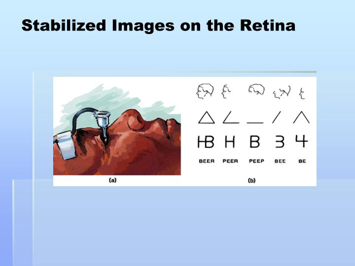 Stabilized Images on the Retina
