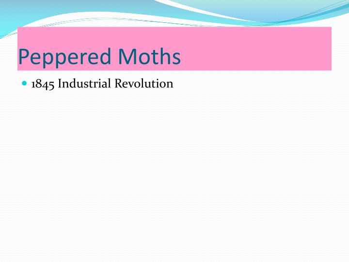 Peppered Moths